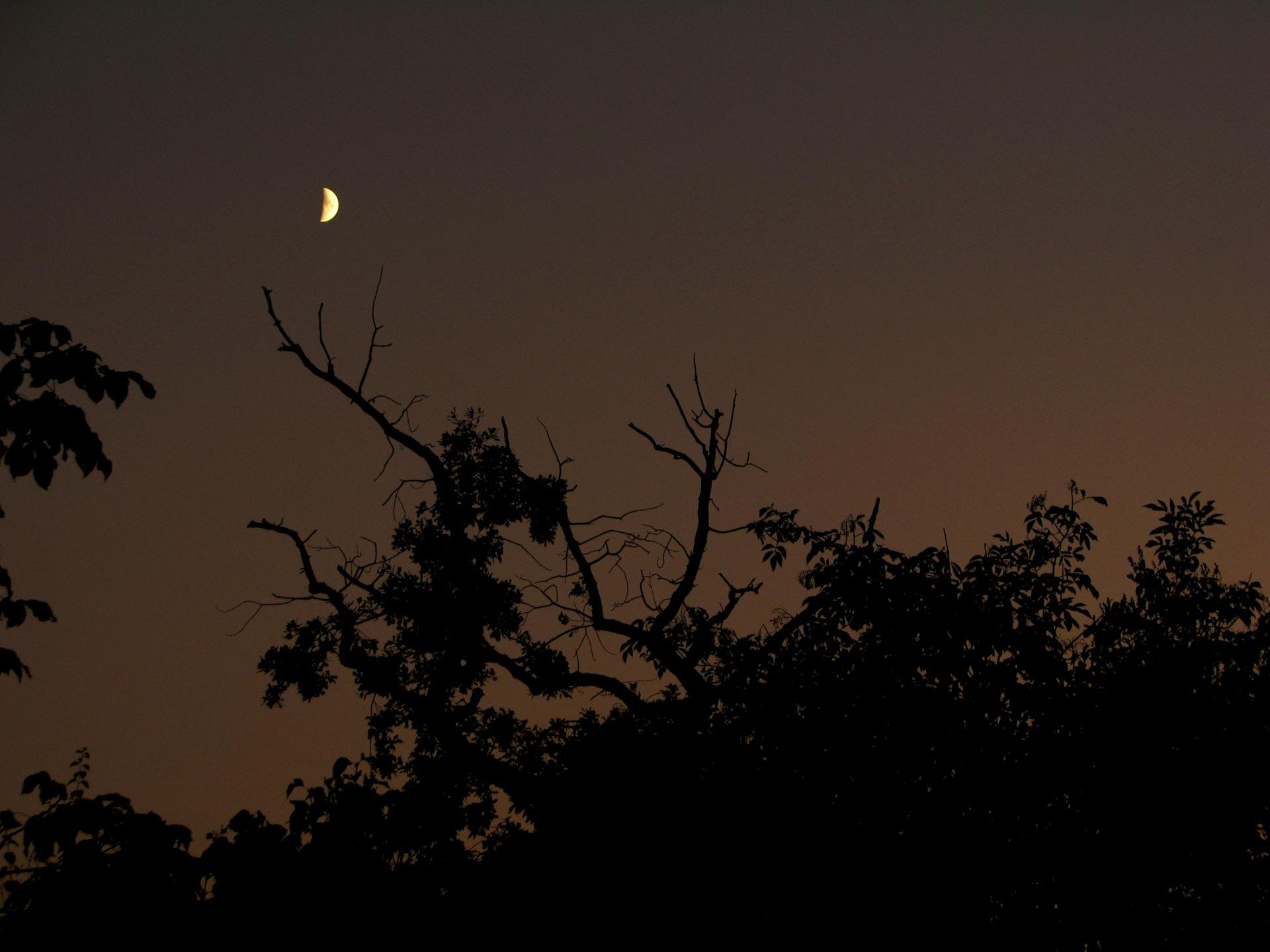 Previous pigeonhole => Moonlight Sonata // Petr Nuska - Photography  - woreshack.cz