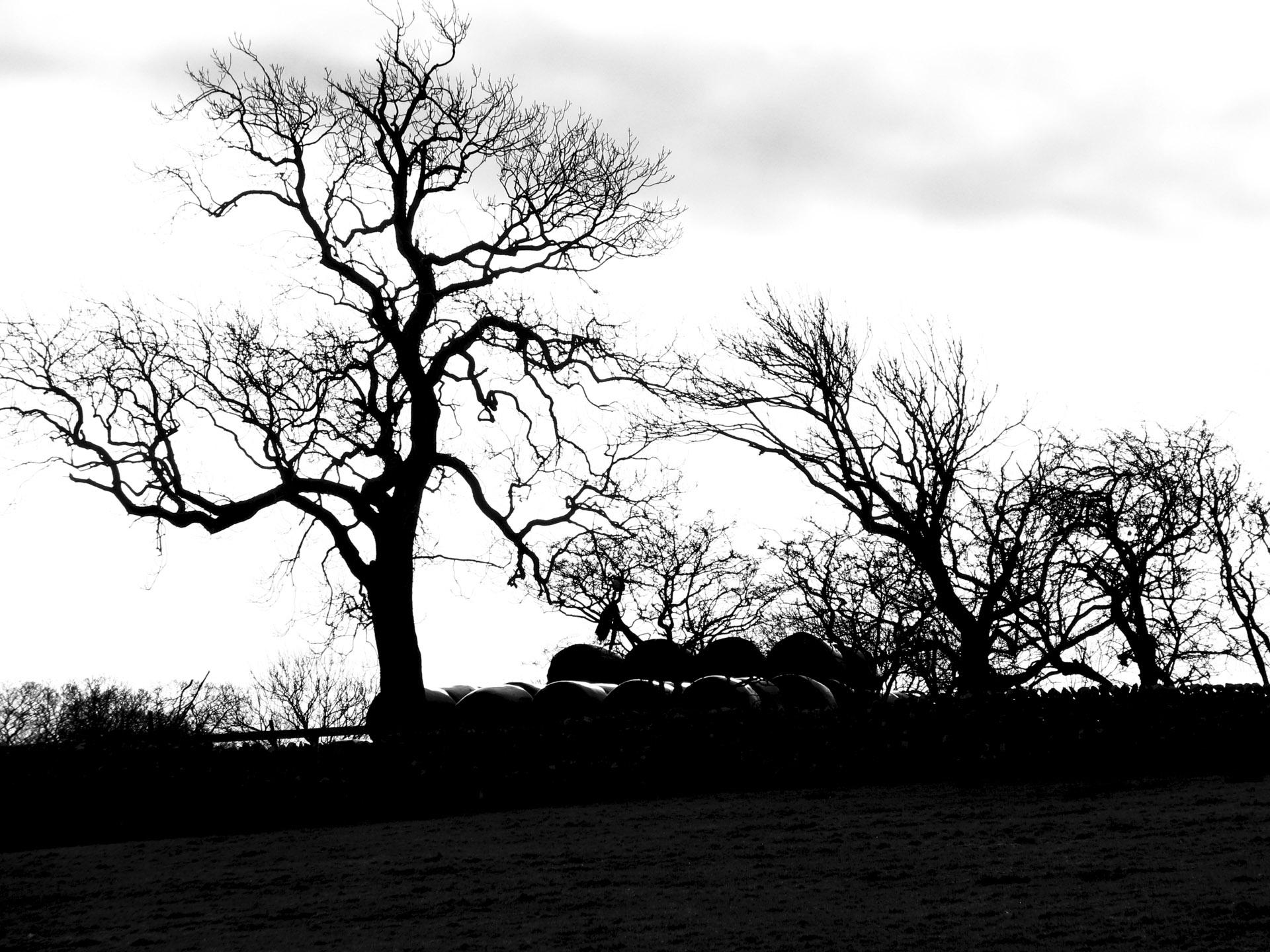 Next pigeonhole => The Secret Life of Trees (I) // Petr Nuska - Photography  - woreshack.cz