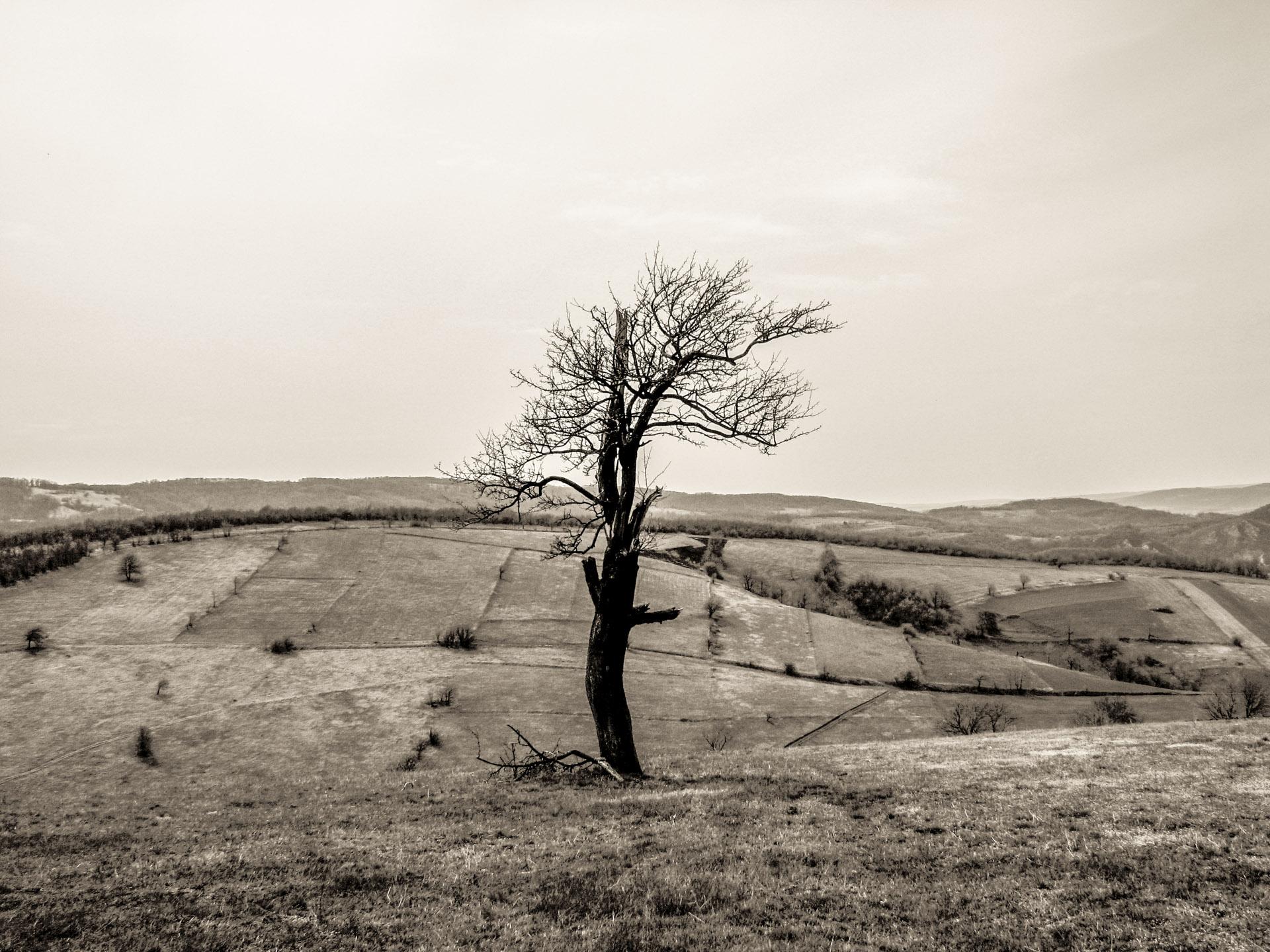 Předchozí galerie => Ze života stromů (II) // Petr Nuska - Fotografie  - woreshack.cz