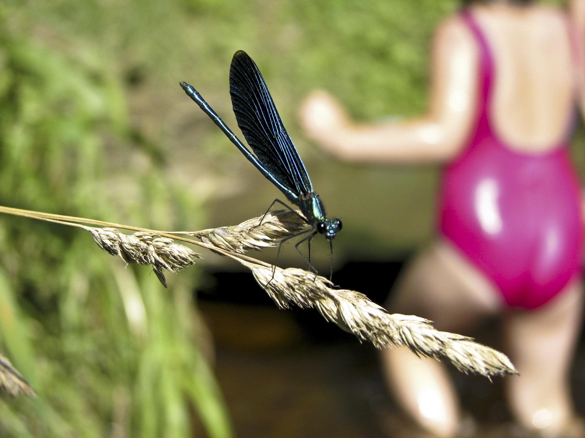 Next pigeonhole => The Secret Life of Multilegged // Petr Nuska - Photography  - woreshack.cz